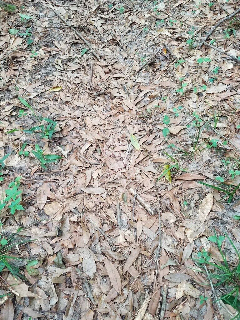 People are going insane trying to find the snake hidden in this pile of leaves.