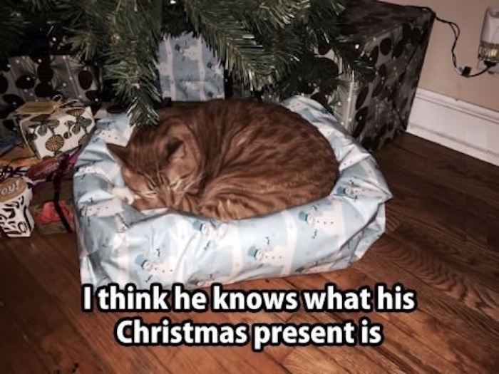 one good part of cat christmas is that there are presents gift wrap just what he wanted - How To Wrap A Cat For Christmas