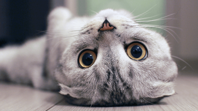 This fascinating cartoon might explain why your cat is such a weird little creature.