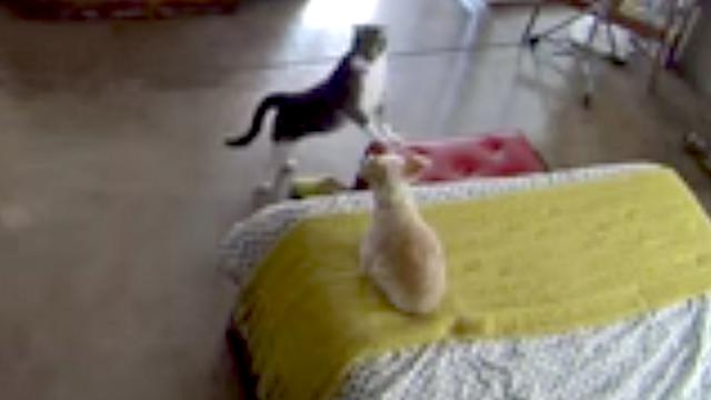 female cat peeing everywhere