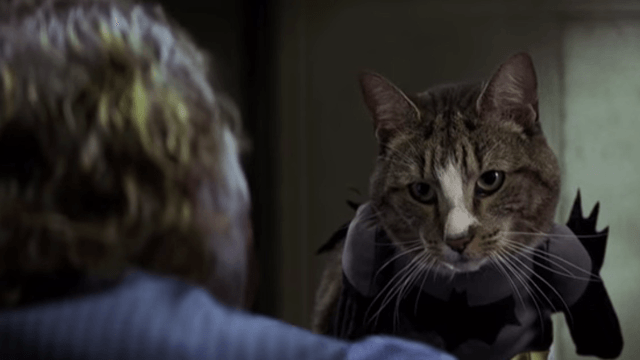 Of course somebody made a video putting cats in famous movie scenes. And yes, it's great.