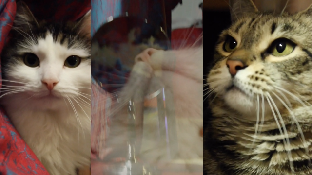 Someone made a music video featuring their cats. They're going to be stars.