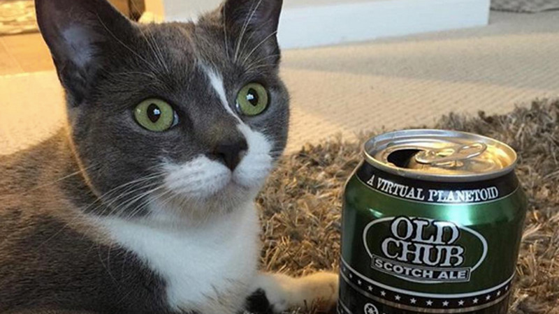 Finally there's an Instagram account that matches up cats with craft beers.