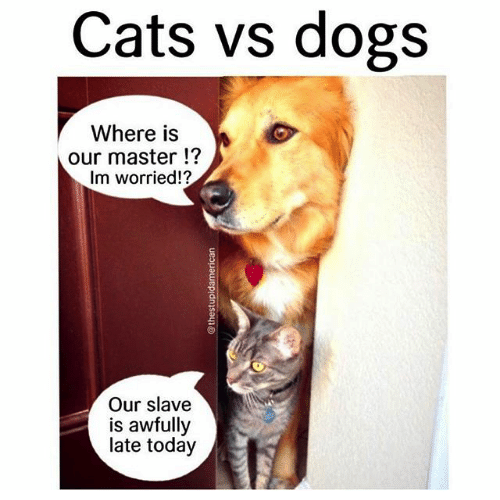 25 Memes Showing Cats Are Better Than Dogs.   Someecards Memes