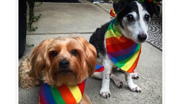 The most stylish dogs who celebrated Gay Pride this weekend.