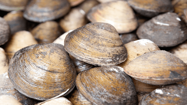 Watching hundreds of clams appear in the sand out of nowhere will ruin the beach for you.