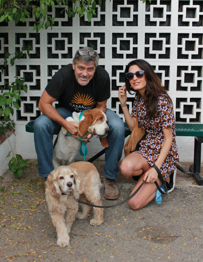 Dog-lover and noted stud George Clooney came to the rescue of a dog no one wanted.