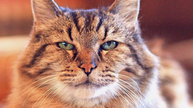 The world's oldest cat, Corduroy, looks absolutely flawless in his Instagram photos.