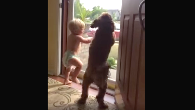 Who is more excited that Daddy's home: his baby or his dog?