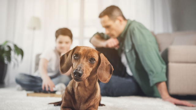 Dad asks if he's wrong for refusing to let son take family dog to college.