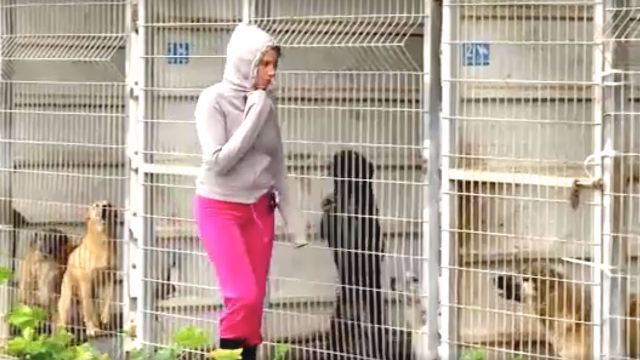 Animal shelter owner Danielle Eden rescued 250 dogs because she didn't want them to suffer.