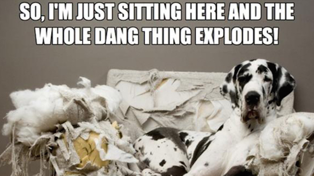 destruction-chewing-dog-memes-6KN.png