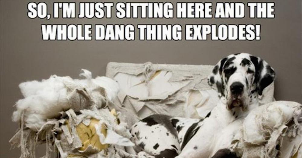 21 Memes For Anyone Whose Dogs Have Ruined Their Lives