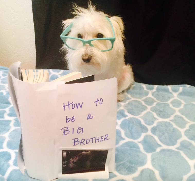 Dogs can't read and that's why this is adorable.