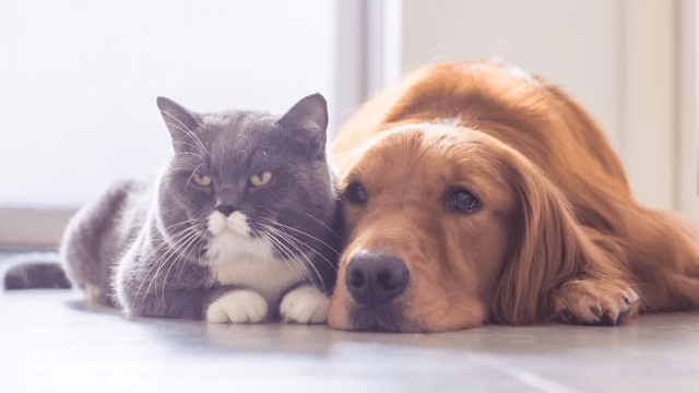 These two dogs and a cat are the most unlikely of friends and it's uncannily adorable.