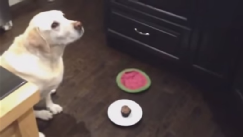 This dog ate his birthday cake in one bite.