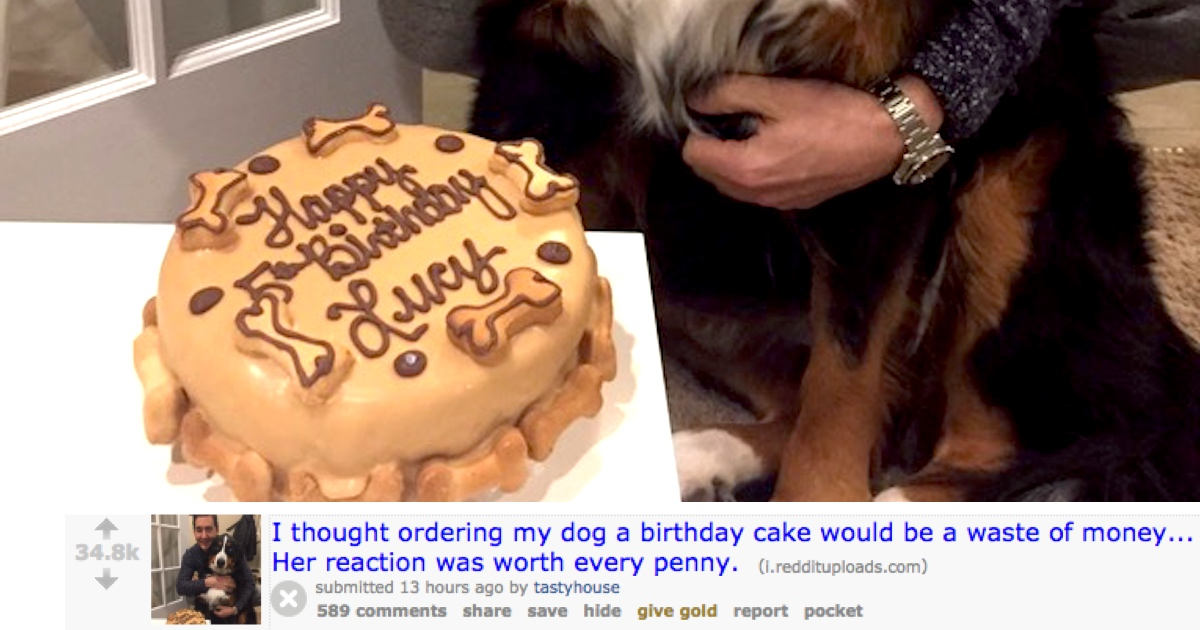 Guy Buys His Dog A Birthday Cake Captures The Greatest
