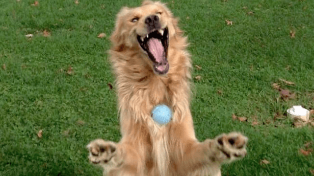 Bizarre photo of dog trying to catch a ball becomes the internet's new favorite meme.