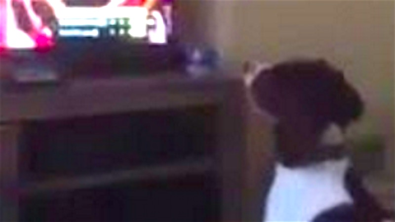 This dog plays fetch for a hilariously mistaken reason.