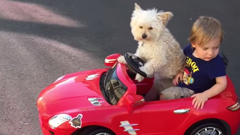 This dog got control of the wheel and took her little human friend cruisin'.