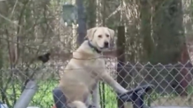 Serious post-tornado news report totally hijacked by cool dog on a riding lawnmower.