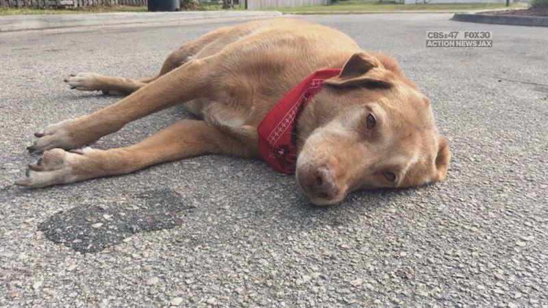 Loyal dog won't leave his human's side after she's killed in a hit-and-run.