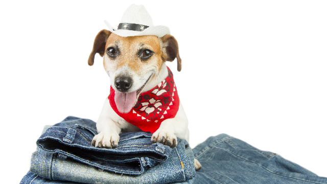 People are freaking out trying to decide how a dog would wear pants.