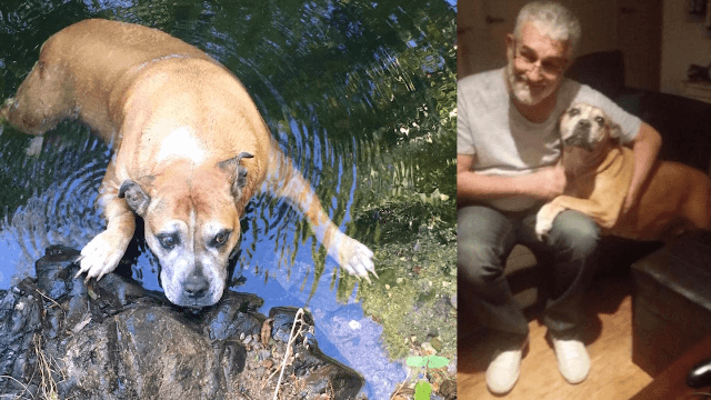 Hikers find (surprisingly fat) dog lost for a month in the wilderness, document the journey home.