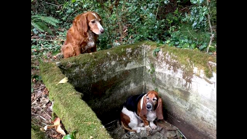 This dog won an award for taking care of her friend who fell down a well. Dogs have awards?