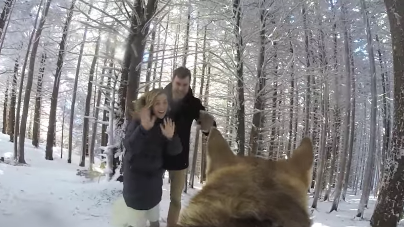 Bride and groom opt for high-end videographer option: GoPro strapped to their dog.