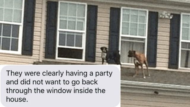 These dogs who climbed onto a roof are the internet's favorite party animals.