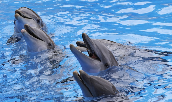 "They decided to turn to dolphins after they realized they were duped by those so-called ""killer whales."""