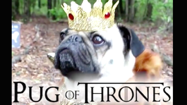 Doug the Pug recreates all your favorite TV shows, makes binge watching charming.
