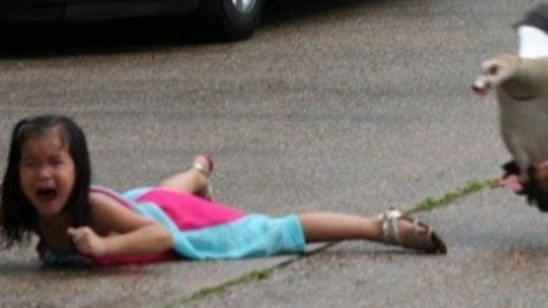 A duck attacked a little girl and her sister rushed to help. Help tweet the photos, that is.