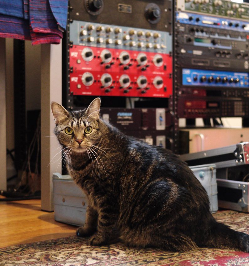 'Felines of New York' interviews the everyday cats living in NYC.