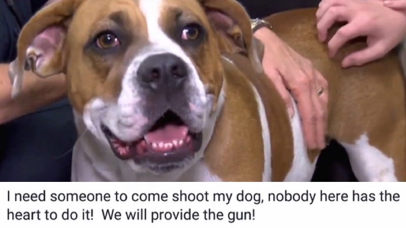 A woman posted on Facebook asking for someone to shoot her dog. The only reply was from the cops.