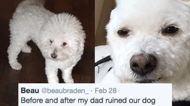 This guy's dad 'ruined' his dog with a '90s haircut and Twitter is losing it.