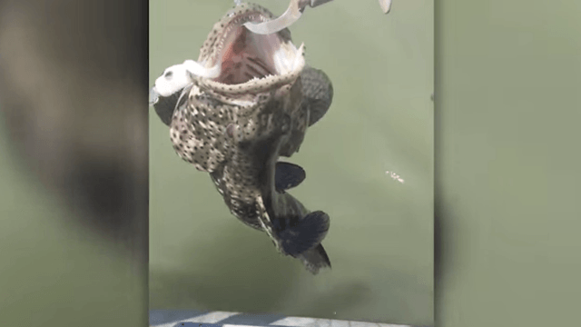 Fisherman catches fish only to be treated to a horrifying surprise in its mouth.