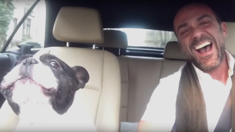 Junior the talented French Bulldog sings Rihanna without any need for autotune.