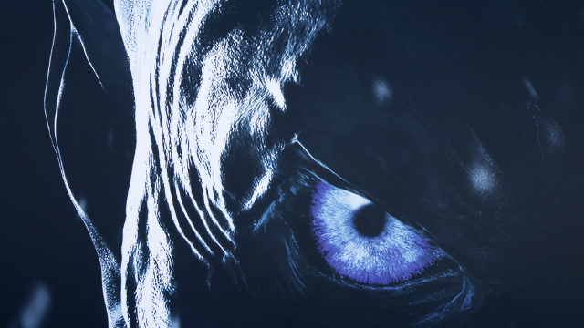 Here's everything we know about the 'Game of Thrones' spinoffs. What is dead may never die.