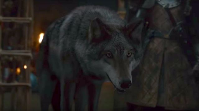 A 'Game of Thrones' fan spotted a heartbreaking detail that will make you mourn Grey Wind all over again.