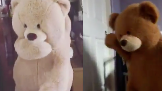 People are emptying out giant stuffed bears and filming themselves dancing inside them.