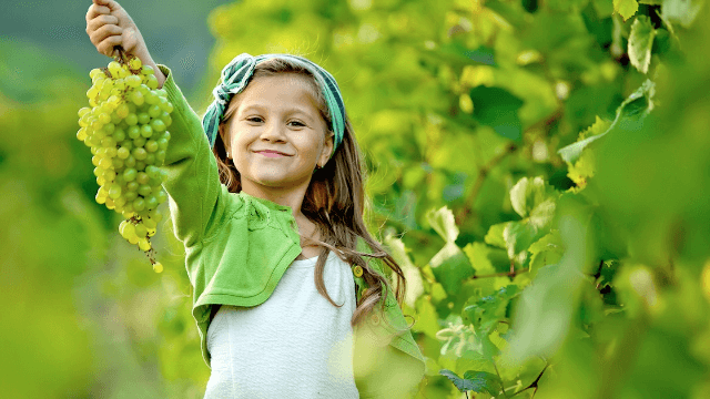 Hilariously literal kid follows mom's instructions for eating grapes to the letter.
