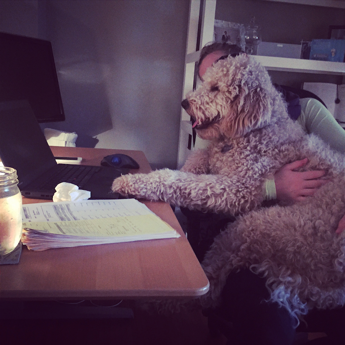 These pets won't let their masters do any work, but they're too adorable to get mad at.