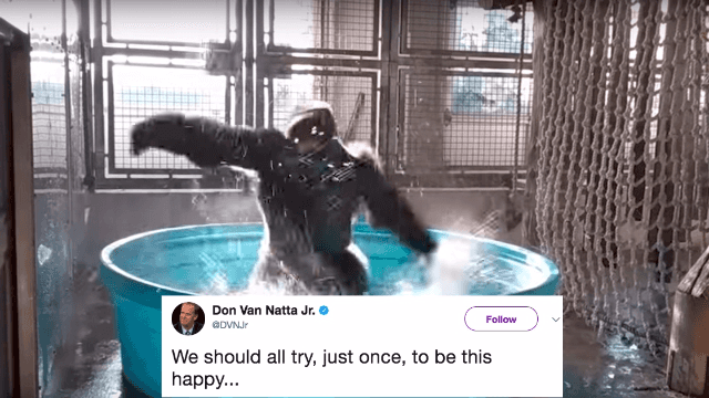 This gorilla dancing to 'Maniac' has filled the internet's heart with joy.