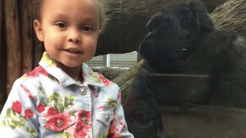 This gorilla taught a little girl a very important life skill: how to give the finger.