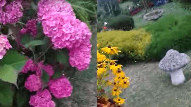 A week after his grandma passed away, this guy found an adorable accidental video on her phone.