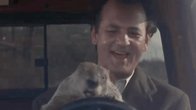 It's Groundhog Day! Did Punxsutawney Phil see his shadow?