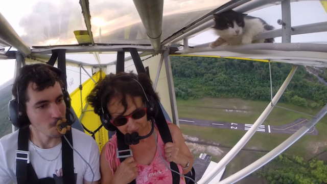 Halfway through this video of a glider's flight, a cat pops up on the wing.