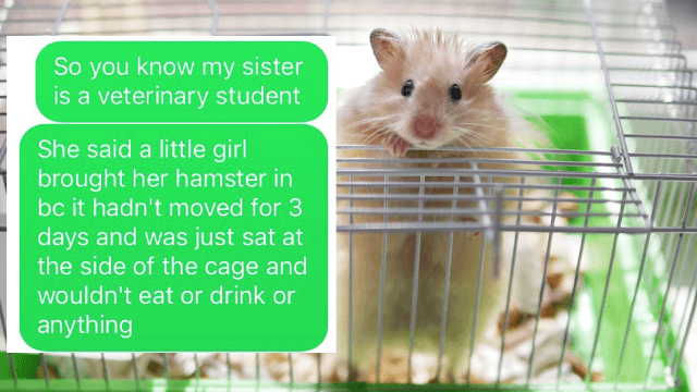 Dramatic story of a hamster with a mysterious ailment mesmerizes the internet.
